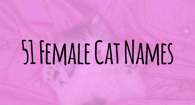 cat girl names