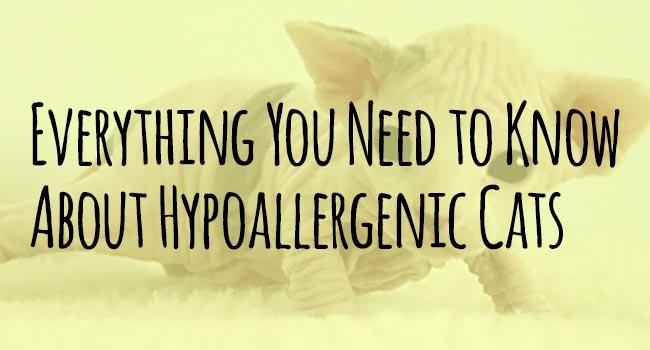 Hypoallergenic-Cats