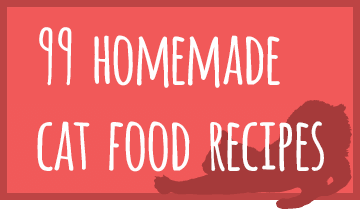 cat-recipe-featured