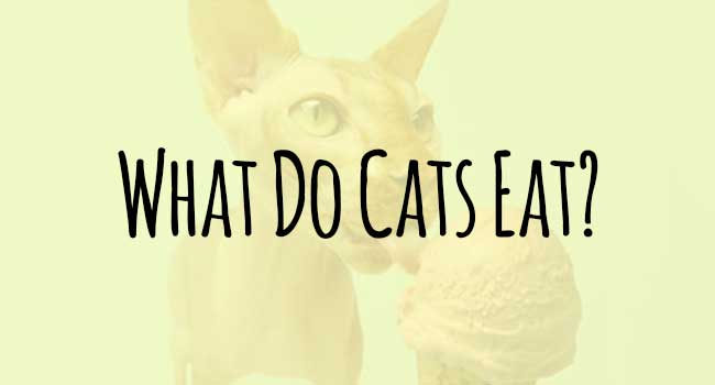 What-Do-Cats-Eat