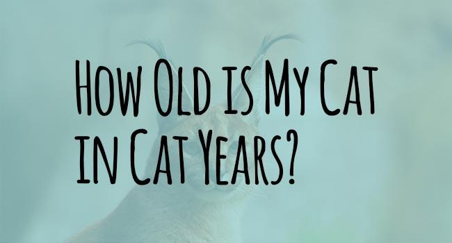 cat-years