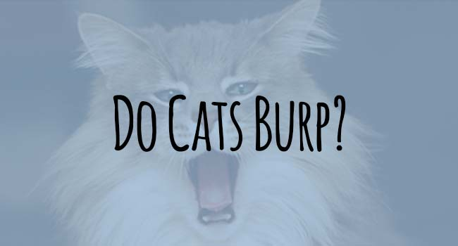 do-cats-burp