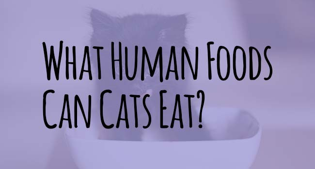 what-human-food-can-cats-eat