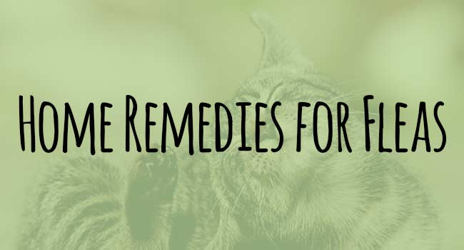 home-remedies-for-fleas