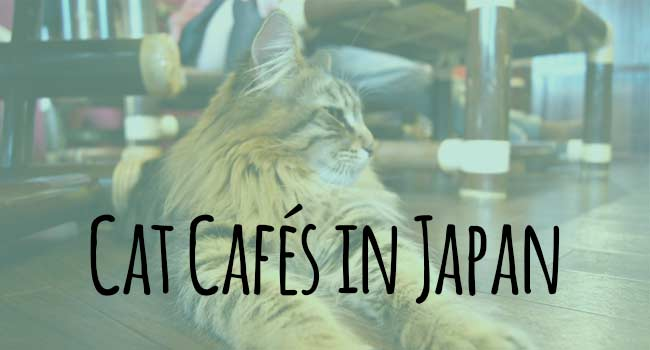 Cat-Cafe-in-Japan