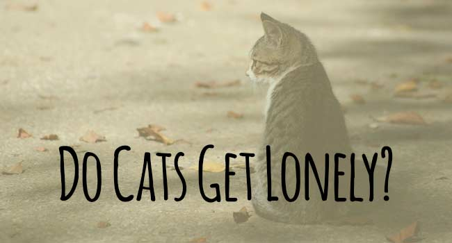 do-cats-get-lonely
