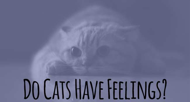 do-cats-have-feelings
