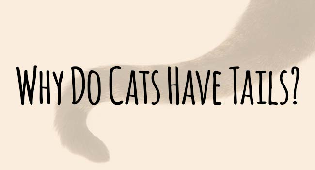 why-do-cats-have-tails