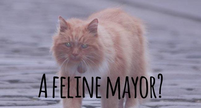a-feline-mayor