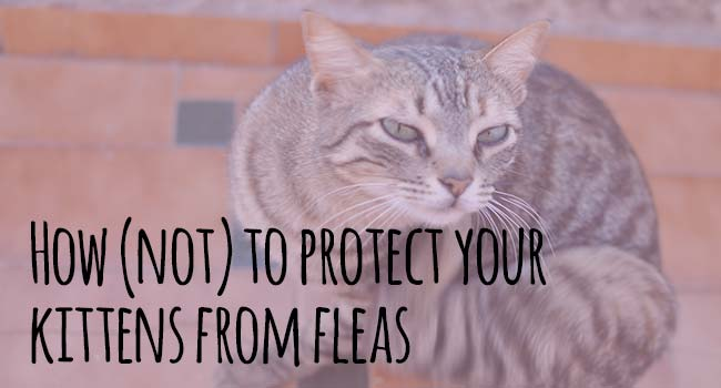 not-protect-from-fleas