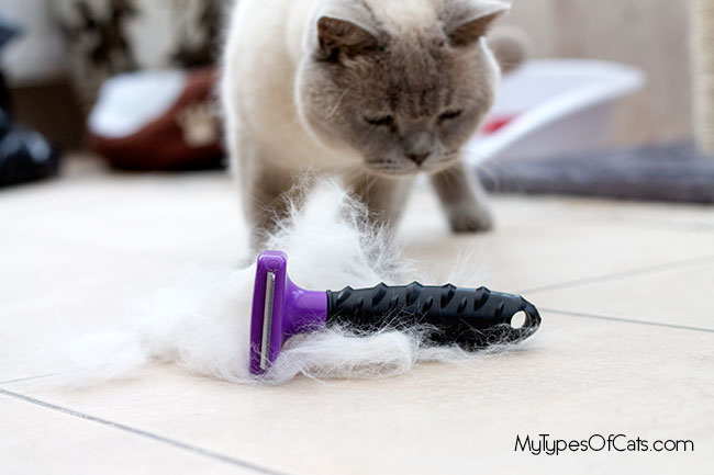furminator-coupon-4