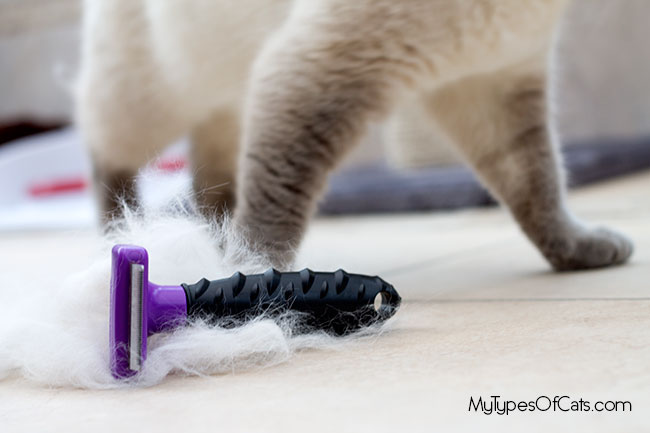 furminator-for-cats-5