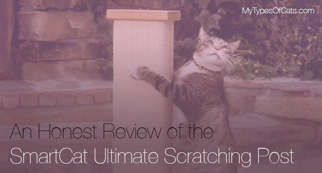 cat-scratching-posts-smartcat-ultimate-scratching-post
